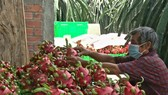 Long An Province facilitates consumption of 15,000 tons of dragon fruits