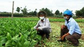 Central farmers make efforts to maintain cultivation during Covid-19 pandemic