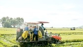 Mekong Delta provinces lack rice harvesting machines for summer-autumn rice crop