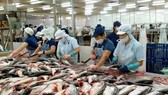 Many Vietnamese seafood exporters not subject to US anti-dumping tariffs