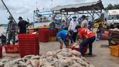 Mekong Delta provinces restart production chains