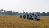 Phân bón Phú Mỹ với sản phẩm cho vùng khô hạn