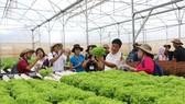 Tham quan các mô hình trồng rau công nghệ cao