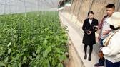 Thận trọng với tour học tập nông nghiệp nước ngoài