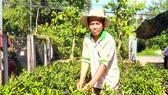 Farmer Nguyen Ngoc Thuan in Hoa Long Commune in Lai Vung District spent 6 years to work overseas.