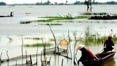 The late flooding season has affected the lives of local people in the Mekong Delta region. (Photo: SGGP)