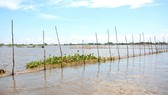 This year's late flood and low water level have resulted in fish decline impacting on the local livelihoods.