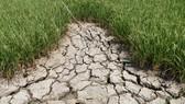 Vĩnh Long ước thiệt hại do thiên tai hơn 331 tỷ đồng