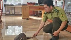 Dân mua thú hoang dã giao cho kiểm lâm thả về rừng