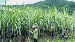 Đường Thái Lan bị đánh thuế 47,64%