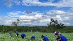 Nhiều loại nông sản ở miền Nam sắp cung vượt cầu