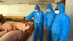 Hỗ trợ ngành chăn nuôi khôi phục sản xuất