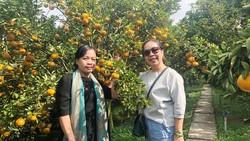 Du khách thích thú chụp hình lưu niệm bên vườn quýt Lai Vung đang vào mùa chín rộ dịp tết