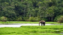 Một khu bảo tồn động vật gabon