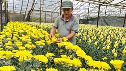 TPHCM là thị trường tiêu thụ lớn nhất của hoa Lâm Đồng. Và ngay trong lúc tỉnh này cách ly người về/đến từ TPHCM lại đồng thời yêu cầu TPHCM mở cửa chợ để tiêu thụ hoa Lâm Đồng. Ảnh: TN