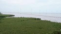 Rừng ngập mặn ven biển giúp hạn chế nước, rác thải xả trực tiếp ra biển tại xã Vĩnh Trạch Đông, TP Bạc Liêu. Ảnh: CAO THĂNG