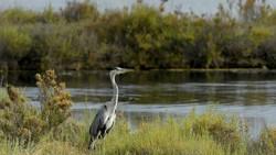 Vùng đầm lầy trở nên xanh tươi  khi không bị xâm nhập mặn