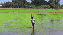 Giá phân bón ở ĐBSCL tiếp tục tăng cao, nông dân gặp khó