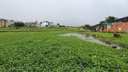 Đất nông nghiệp tại huyện Bình Chánh
