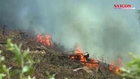 Đến lượt rừng thông ở Quảng Bình bốc cháy ngùn ngụt
