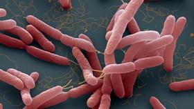 """Đường lây nhiễm chính của vi khuẩn """"ăn thịt người"""" và cách phòng tránh"""