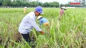 Sôi động thị trường lúa gạo cuối năm