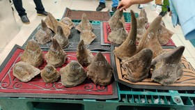 Đường đi của gần 100kg nghi sừng tê giác ở sân bay Tân Sơn Nhất