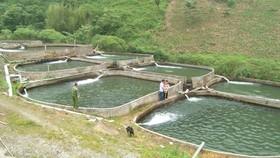 Kiểm soát việc nhập khẩu cá tầm đảm bảo đúng nguồn gốc xuất xứ