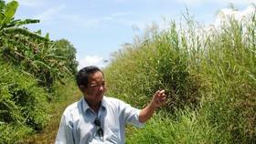 Chốt phương án bồi thường đất lâm nghiệp ở U Minh Hạ