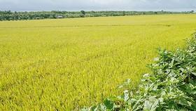 Chậm ban hành kết luận thanh tra, UBND huyện U Minh (Cà Mau) bị phê bình