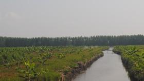 Cà Mau chỉ đạo kiểm tra đối tác tự chuyển đổi 100 ha đất rừng