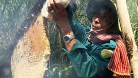 Nghề gác kèo ong trở thành Di sản Văn hóa phi vật thể cấp quốc gia