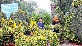 Người dân TPHCM tất bật lựa hoa kiểng đón Tết