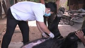Bốn cá thể gấu ở Đồng Nai chết bất thường