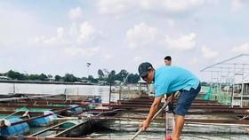 Cá bè chết bất thường trên sông Đồng Nai