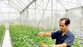 Google support Vietnamese farmers by teaching them to use internet (Photo: SGGP)