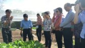 The mission team visits a farm in Cu Chi (Photo: SGGP)