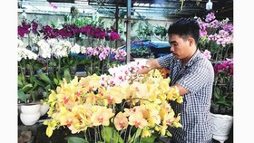 An orchid shop owner on Pham Van Dong Street is taking care of his flowers. (Photo: SGGP)