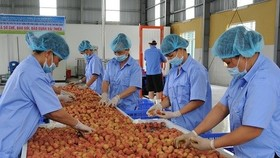 The transportation cost has accounted for 61 percent of total logistics cost for fruit and vegetable products. (Photo: kinhtedothi.vn)