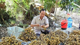 Batch of Vietnamese longan to be shipped to Australia