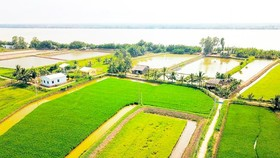 A paddy field in Chau Thanh District in Tra Vinh Province in the Mekong Delta (Photo: SGGP)