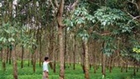 Binh Duong reclaims 346ha rubber plantation for industrial parks