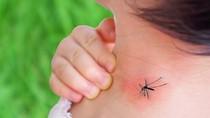 Dengue cases rise in Vietnam