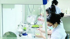 Young engineers working in the HCMC Biotechnology Center. (Photo: SGGP)