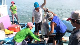 South- Central fishermen enjoy bumper tuna fish catch (Photo: SGGP)