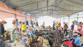 Mekong Delta call for greater consumption of sweet potatoes to help farmers