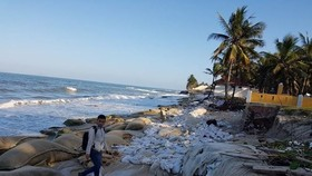 Cua Dai beach has been seriously eroded for years (Photo: tienphong.vn)