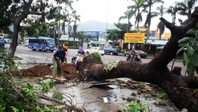 Functional force is cleaning up uprooted tree along roads
