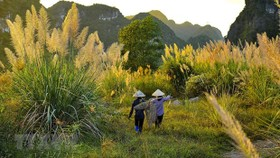 Ninh Binh is home to Trang An Landscape Complex - which is recognised by UNESCO as the world's mixed cultural and natural heritage, the first of its kind in Southeast Asia. (Photo: VNA)