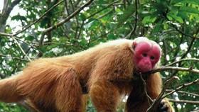 Vu Quang National Park releases three rare animals to wild